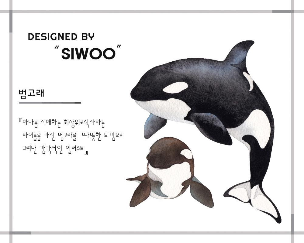 설명_범고래2.jpg